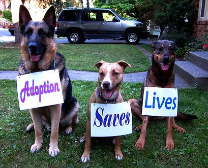 Adoption Saves Lives, Rescue4All, R4A