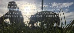 Rescue4All pledge mission cover