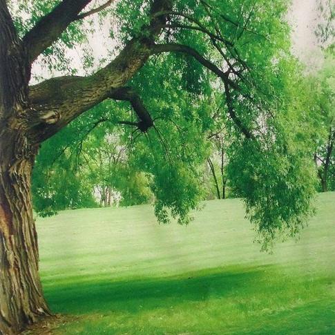 Au coin de l'arbre (enfants)
