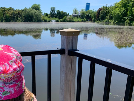 Fairy Lake ecology project targets invasive species