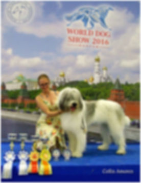 mioritic, owczarek rumuński, ciobanesc romanesc mioritic, zwycięzca świata, hodowla, szczenięta, puppies, welpen, kennel, zucht, Collis Amores, Genevieve