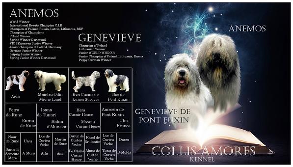 owczarek rumunski, mioritic, cobanesc romanesc, hodowla, szczeniaki, kennel, zucht, welpen, puppies, collis amores