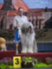 owczarek rumuński, mioritc, hodowla, romanian mioritic shepherd, kennel, puppies, zwyciezca swiata, world winner, ciobanesc romanesc mioritic