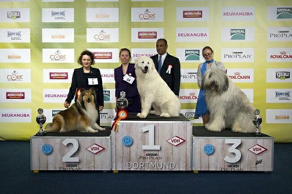mioritic, Anemos, world winner, zwycięzca świata, hodowla, szczenięta