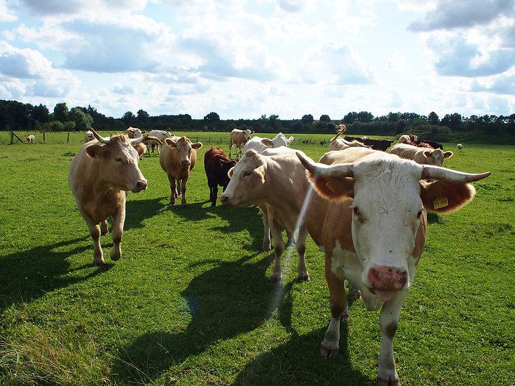 Tierhaltung-Titelbild.JPG