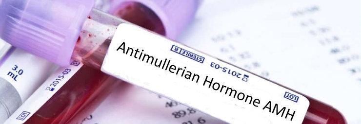 Anti-Mullerian Hormone (AMH)