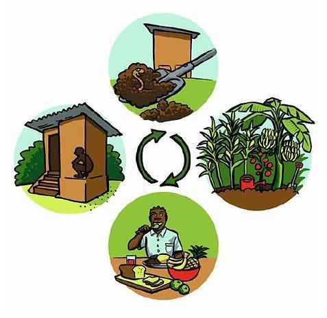 Eco San Doc illustration3  1024_1.png