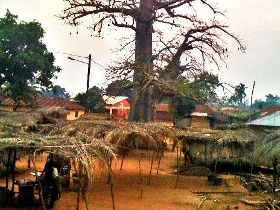 tree%20(2)_edited.jpg