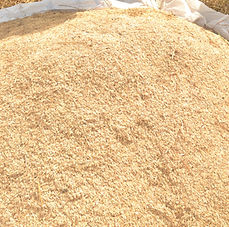 Harvested Rice - BCB