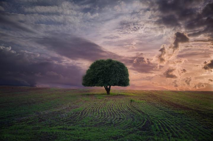 טבע ונוף