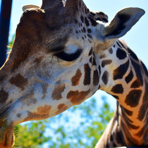 Roer's Zoofari Adventure For The Whole Family