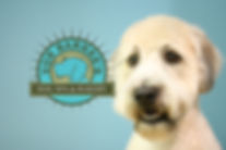 Wilmington dog grooming