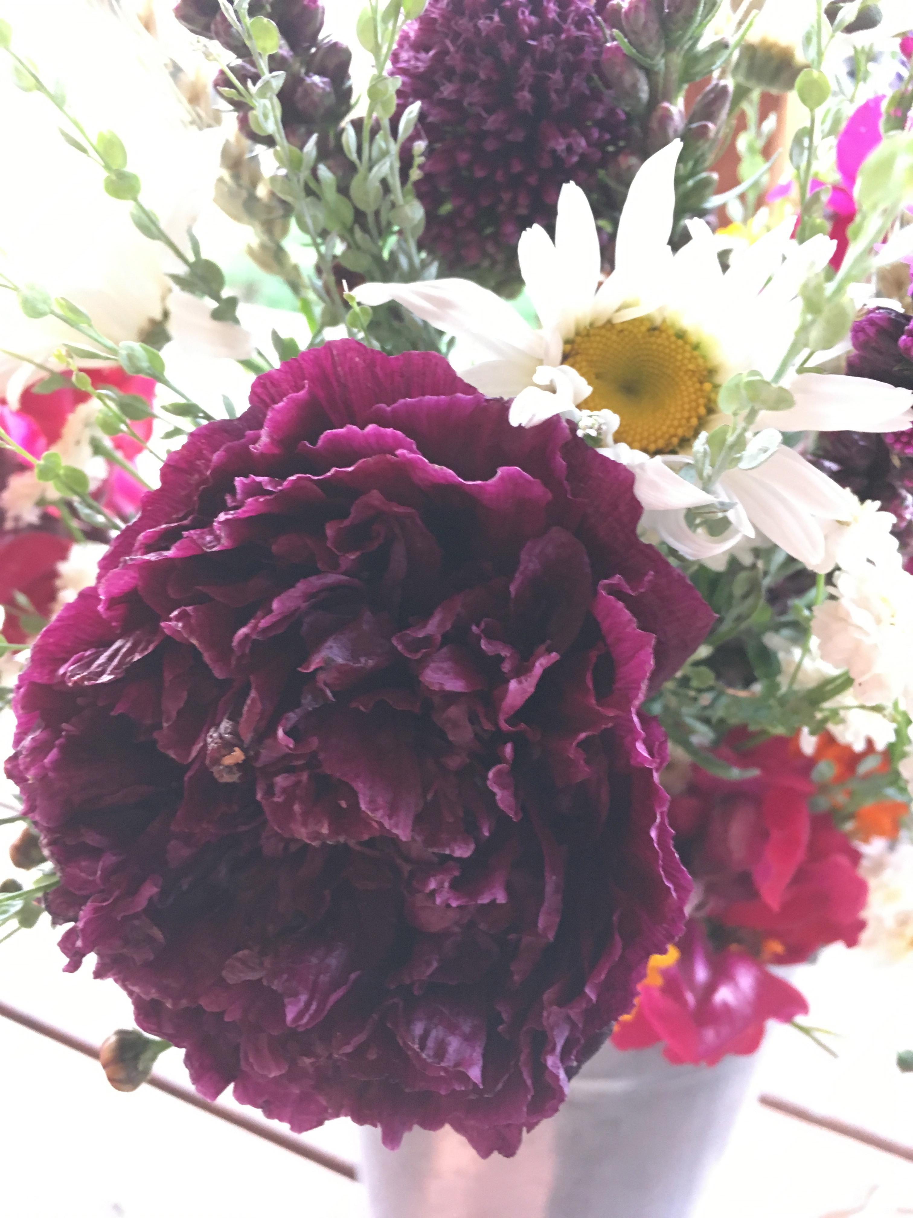 Kokoro poppies