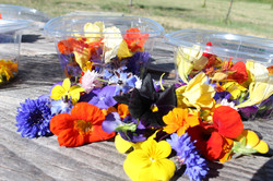 Kokoro edible flowers