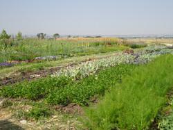 Kokoro flower farm