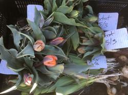 Kokoro tulips