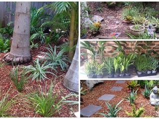 Tranquil Subtropical Garden