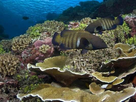 La biodiversidad de los océanos