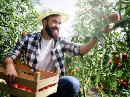 ¿El tomate es una fruta o una verdura?