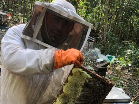 Cae la producción de miel de abeja en la Península por huracanes de 2020