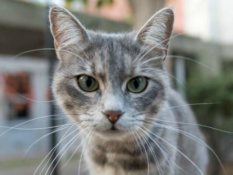 ¡Toma nota! De esta sencilla manera podrás evitar que tu Gato te muerda o arañe