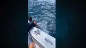 Rescataron al perrito perdido en el MAR de Florida; así fue el heroico momento (VIDEO)