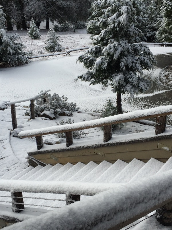 Snowy New Year!