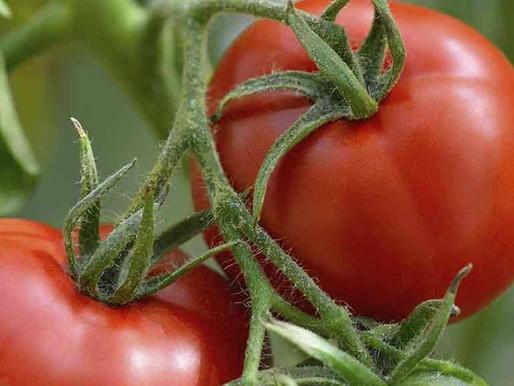 Encouraging local produce