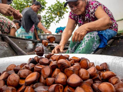 Máquina para extração de óleo de andiroba é instalada em comunidade da Amazônia