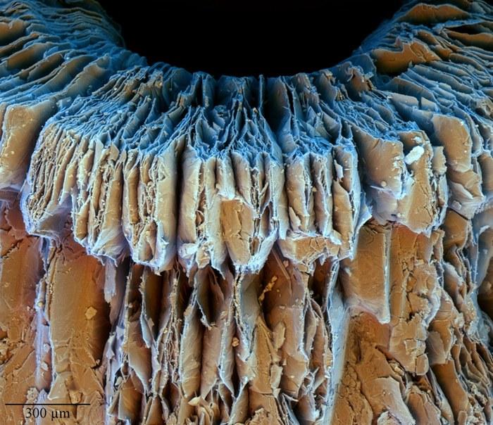 """Registro é de uma """"vermiculita expandida"""" que tem seus flocos dilatados em aspecto de sanfona por ação do vapor d'água - Divulgação/MCTI"""