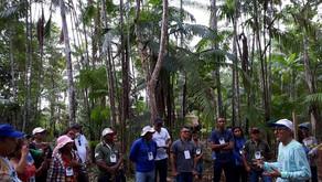 Produtores de açaí no Maranhão terão mais acesso a tecnologias de manejo e recuperação de açaizais