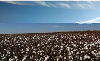 Embrapa e Insper realizam estudo para expandir o agro brasileiro no cenário internacional