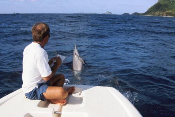 O projeto Golfinho Rotador completa 25 anos de trabalhos voltados para a preservação da espécie e da natureza no arquipélago Fernando de NoronhaDivulgação/ Projeto Golfinho