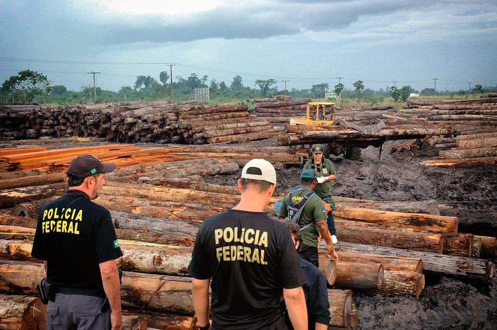 Agentes da Policia Federal e do Ibama durante opereção que apreendeu madeira ilegal no Pará em 2008 (Foto: DCS/DPF)