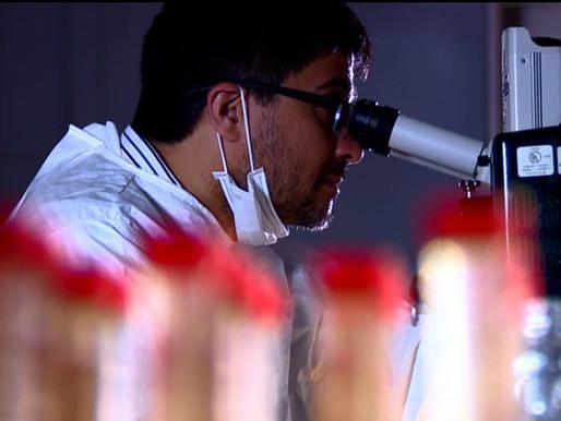 Pesquisa do LNBio reproduz efeitos do vírus zika no desenvolvimento de embriões