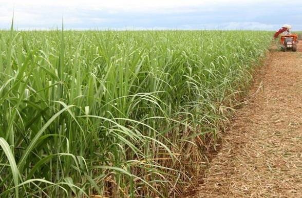 Programa viabilizará o plantio de mais de 400 mil hectares de cana-de-açúcar Divulgação/Governo de MG