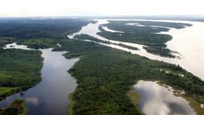 Estudo aponta fortalecimento da bioeconomia amazônica pelo acesso à energia elétrica
