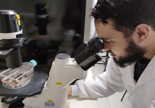 Capes prorroga a duração das bolsas de mestrado e doutorado