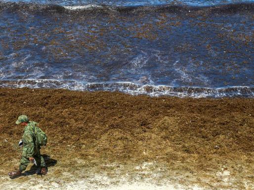 Óleo atinge mais duas praias pernambucanas