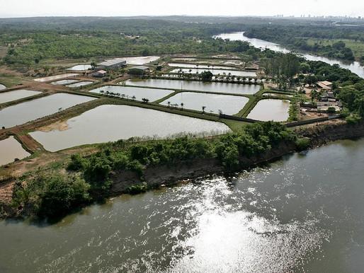 Produção de peixes no Brasil cresce com apoio de pesquisas da Embrapa
