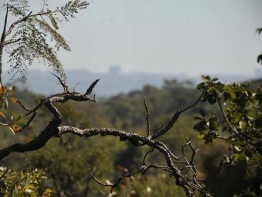 Bolsa Verde comprova eficácia na proteção da biodiversidade