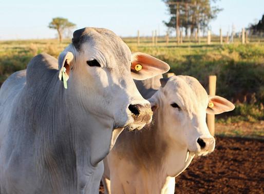 Boas práticas hídricas reduzem consumo de água na pecuária