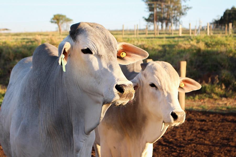 A oferta e a qualidade dos recursos hídricos têm impacto direto na produção pecuária. - Foto: Gisele Rosso