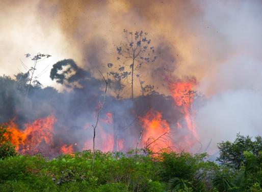 Desmatamento está na origem dos incêndios fora de proporção que assolam o país