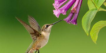 Especialista alerta para desequilíbrio causado pela extinção das aves
