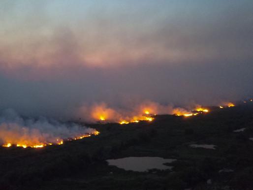 Ibama suspeita que incêndios em MS foram provocados por ação humana