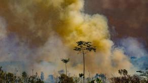 Três estados lideram o ranking das queimadas na Floresta Amazônica