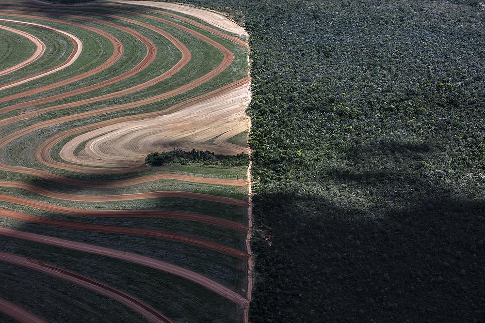 A imagem que abre este artigo mostra plantação e a floresta foi tirada no estado de Tocantins (Foto: Daniel Beltrá/Greenpeace)