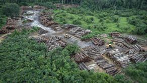 Exonerações na fiscalização do Ibama expõem ameaças à Floresta Amazônica durante a pandemia da Covid