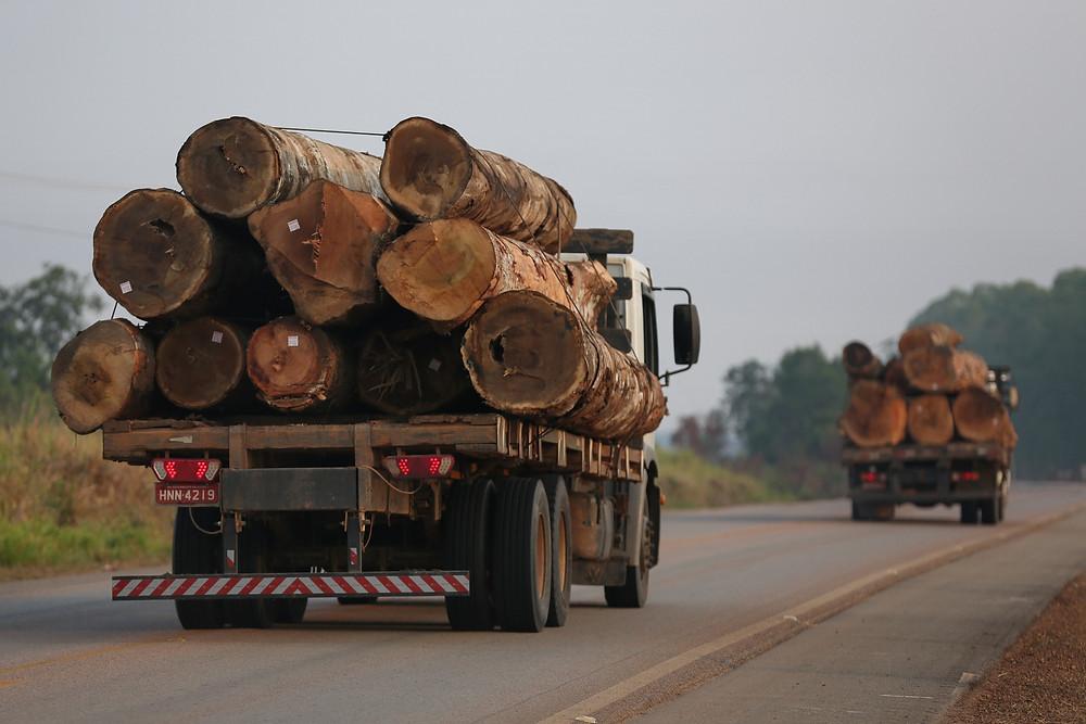 A imagem acima mostra um flagrante de caminhões transportando toras de madeira ilegal na rodovia BR-319, no trajeto entre Porto Velho, em Rondônia, e Humaitá, no Amazonas em 24/08/2019 (Foto: Michael Dantas/WWF-Brasil)